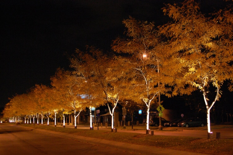 Trees along a St. Louis street are illuminated at night with uplighting