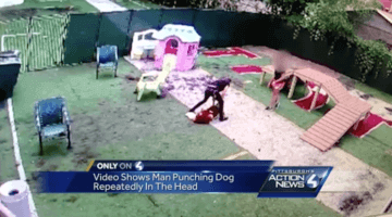 A screencapture from WTAE's story about a St. Bernard being punched at a local doggy day care