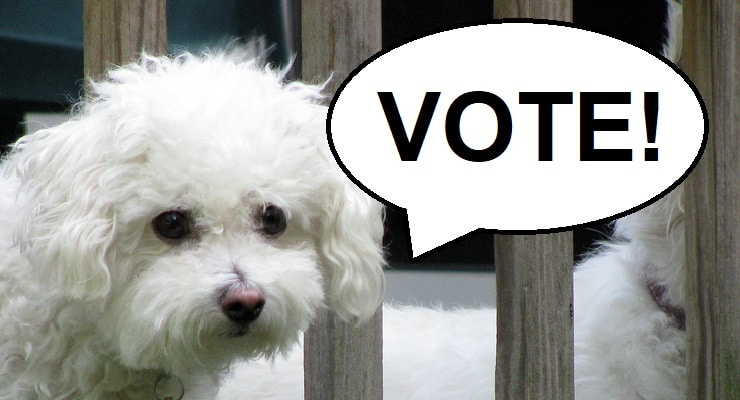 """A small dog pictured with a speech bubble that says """"Vote"""""""