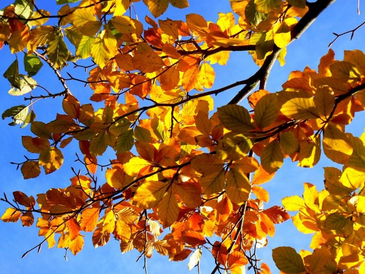 Autumn leaves on a tree branch